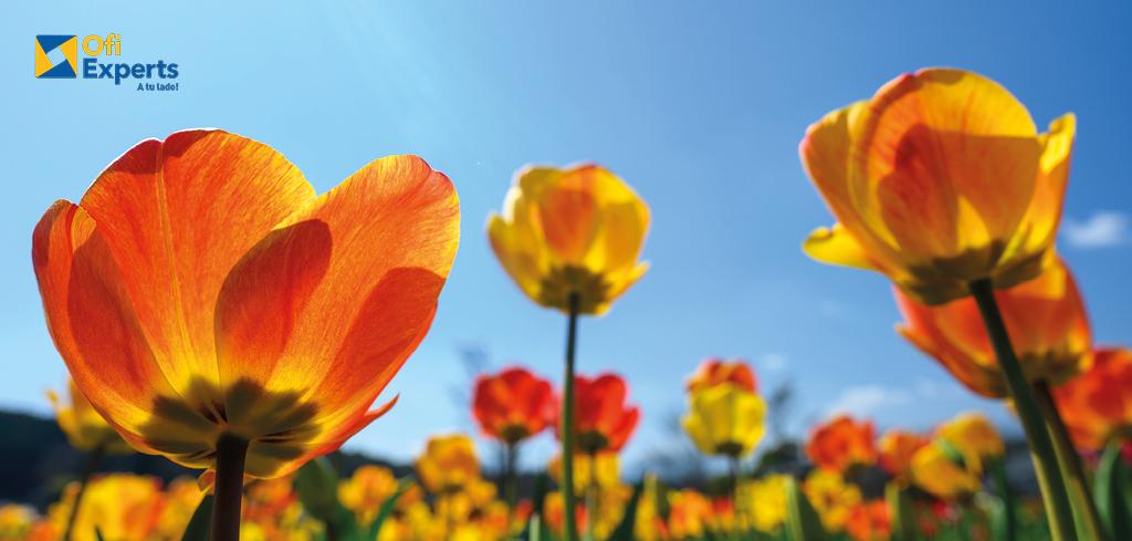 Sonríe, es primavera!